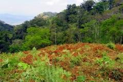 Ansicht ZAC-Baugrundstück in Lutindi/Usambara-Mountains