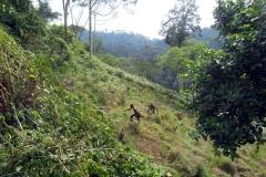 Bush-Cleaning auf dem  ZAC-Baugrundstück in Lutindi/Usambara-Mountains