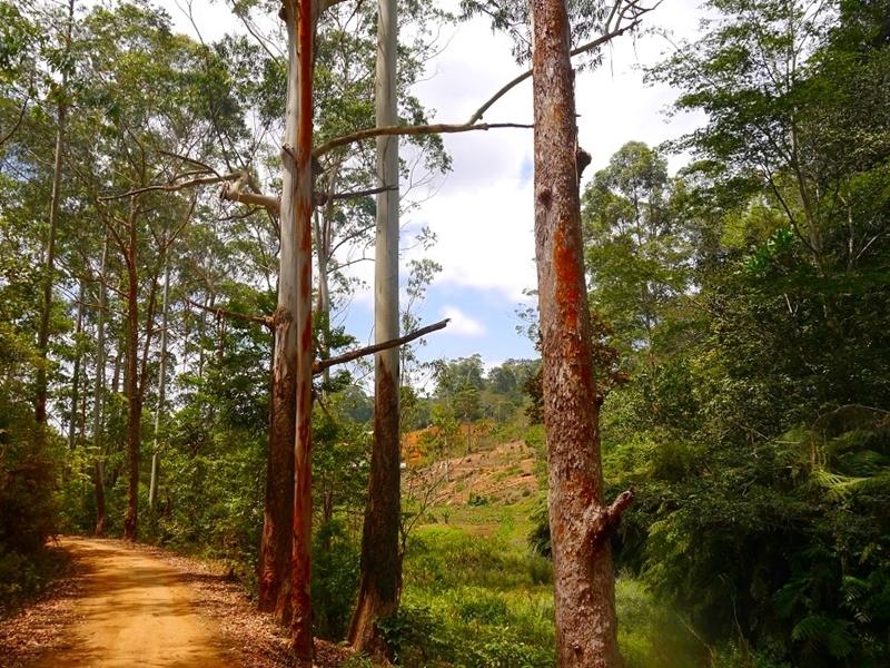 Weg zu unserem Grundstück in Lutindi/Usambara-Mountains (Biodiversitäten-Reservat)